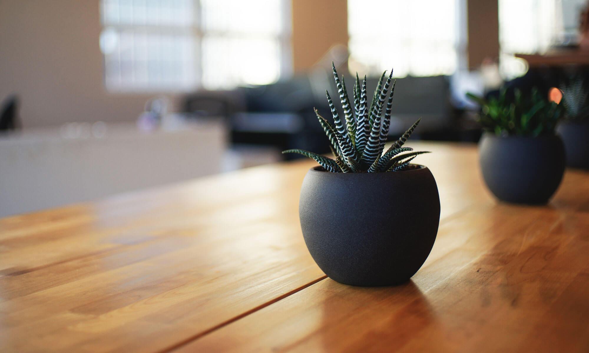 Global Plant